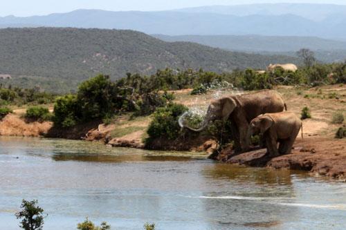addo-elephant-park