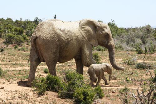 boka-safari