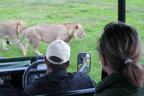 infor-safariresan