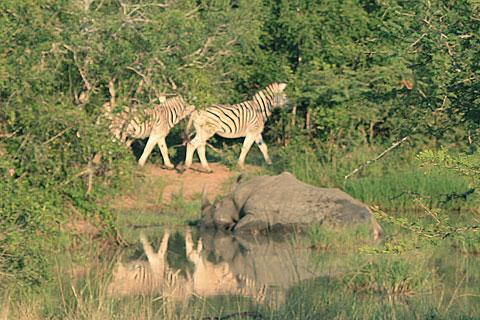safari-buskig