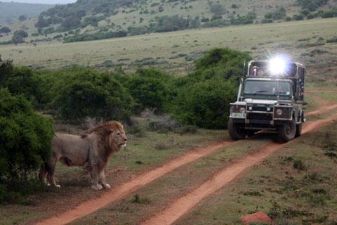 safari-perfekta-bilden