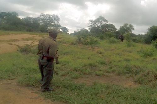 safari-till-fots