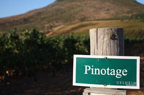 sydafrikanska-viner